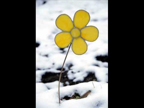 chant de noel une fleur m'a dit