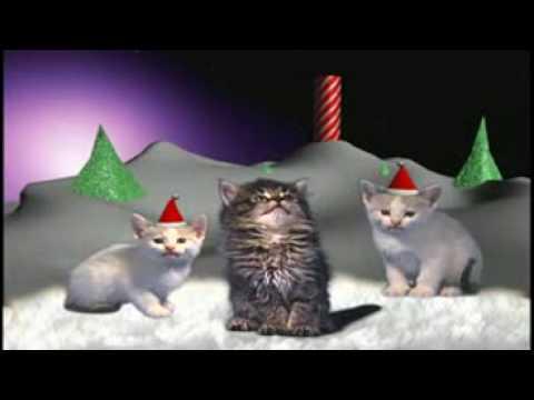 musique de noel chat